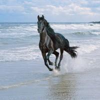 Бегущий по волнам